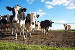 default farming agriculture