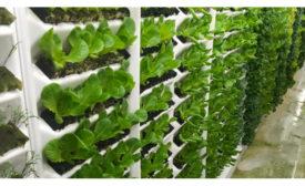 Living Greens Farm new grow room