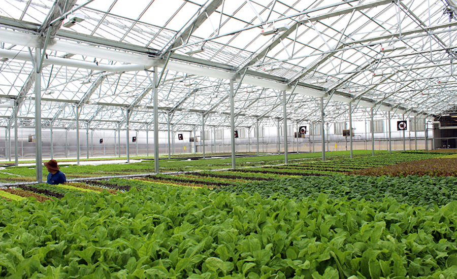 bright farms roundy�s partner to build hydroponic