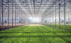 BrightFarms OH greenhouse