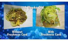 Food Freshness Card
