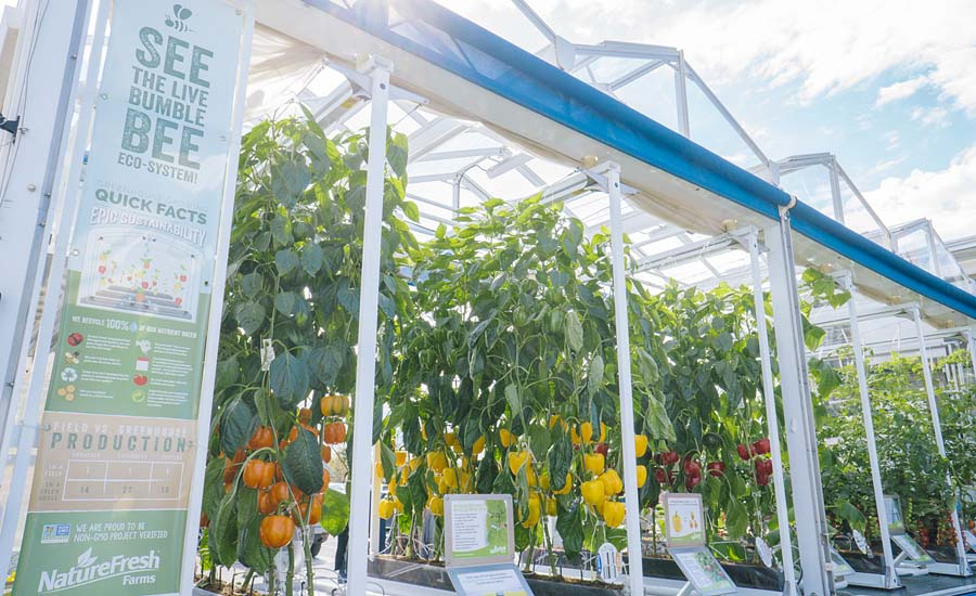 ... And Complimented By A Live Bumblebee Eco System, The GEC Serves As An  Education Resource To Inform Consumers About How Greenhouse Vegetables Grow.