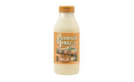 Promised Land pumpkin spice milk