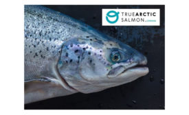 Cermaq True Arctic salmon