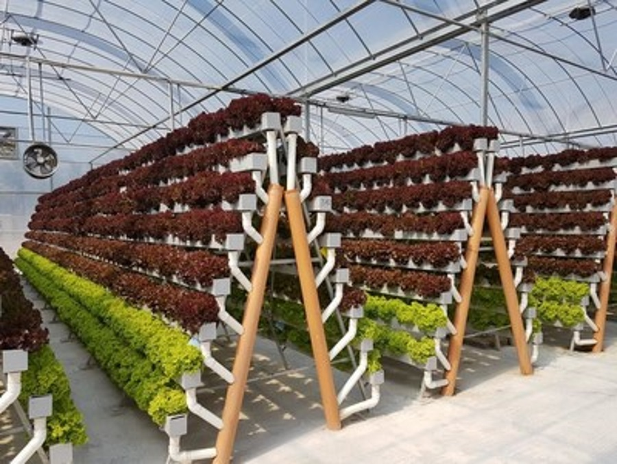 Pegasus Food Futures to expand hydroponic farms | 2018-02 ...