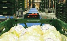 Edeka Germany Grocery Automation