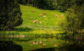 Regenerative Agriculture Dairy Danone North America