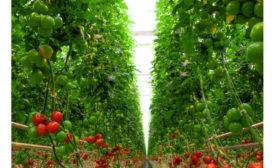 Delta Ohio Warehouse Organic Greenhouse Tomatoes Nature Fresh Farms