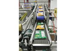 Multi Conveyor Asynchronous bag conveyor