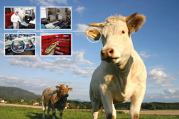 CSB traceability solution