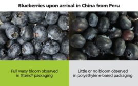 Xtend Packaging for blueberries