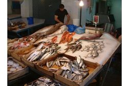 CAS DataLoggers fish temp