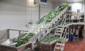 Suja MG_2506 cucumber conveyor